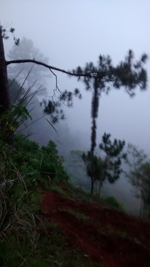 Horror movie fog and trees.