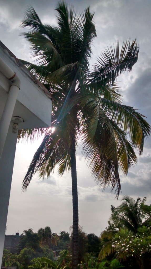Palm tree outside our window