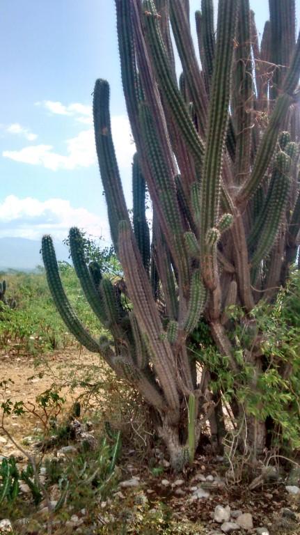 Cactus specimen.