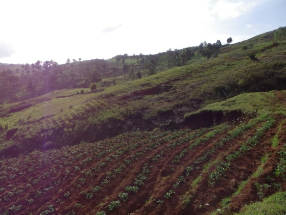 Terraced farming on the slopes.